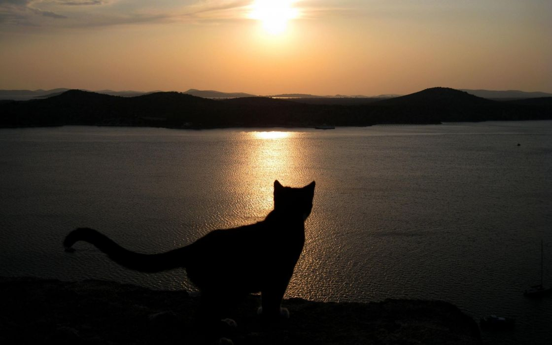 Silhouette of a cat at sunset wallpaper