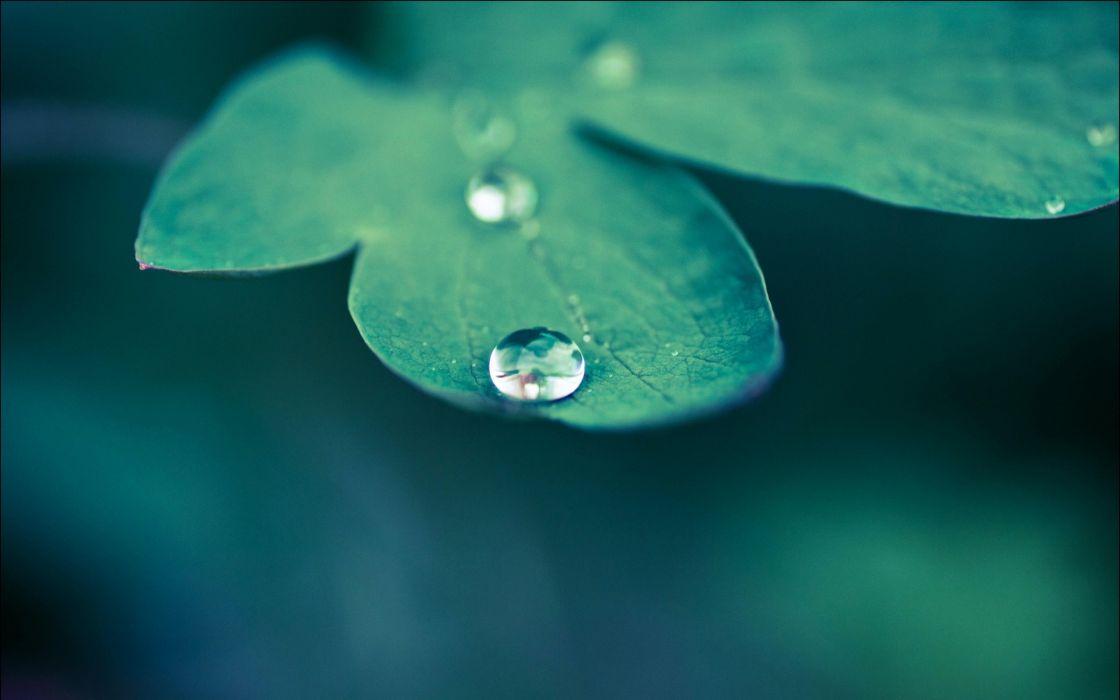 Dew drops a green leaf wallpaper