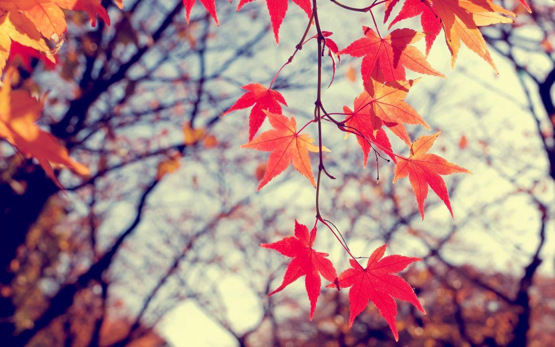 Fire leafs wallpaper