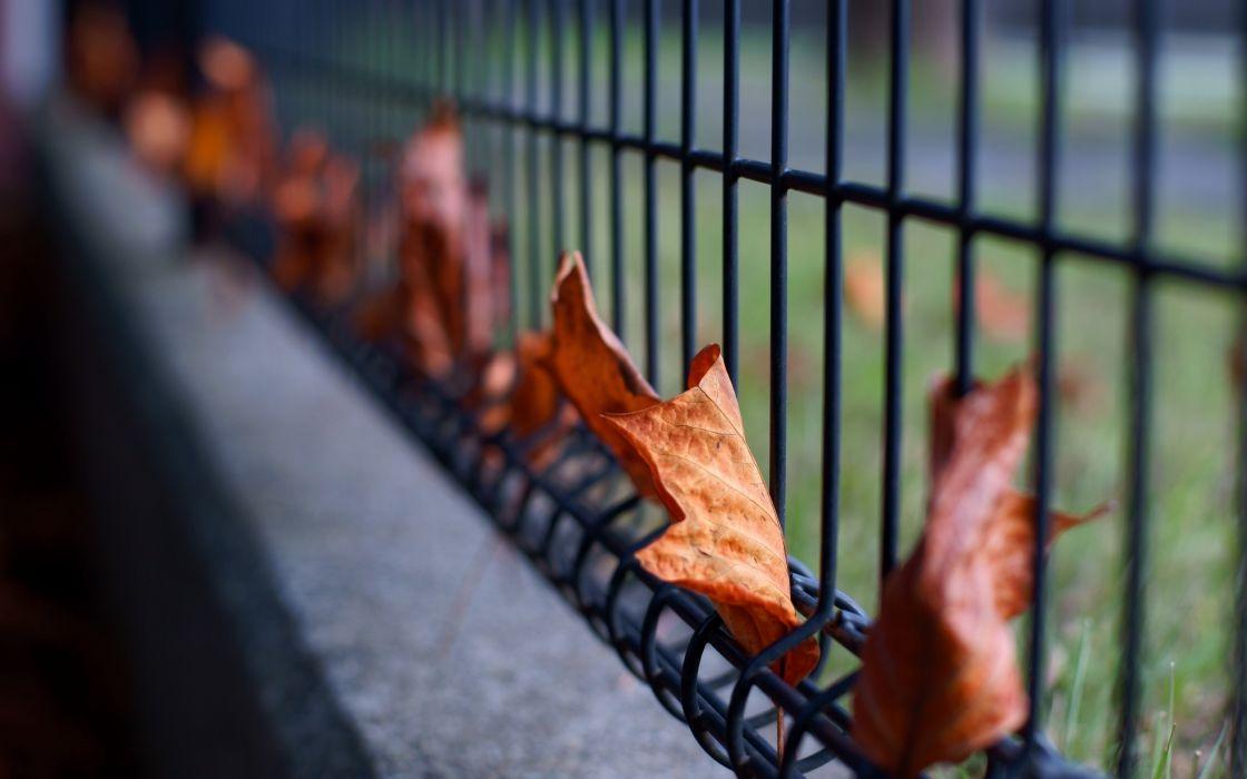 Imprisoned leaves wallpaper