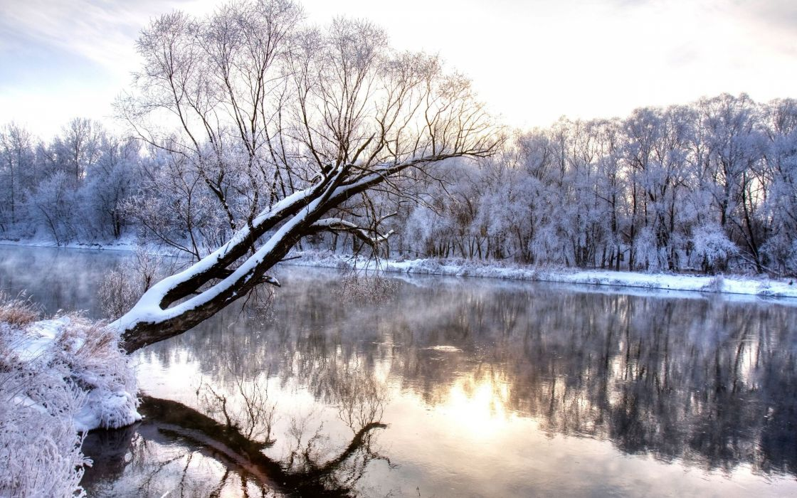 Winter river with a tree standing alone wallpaper