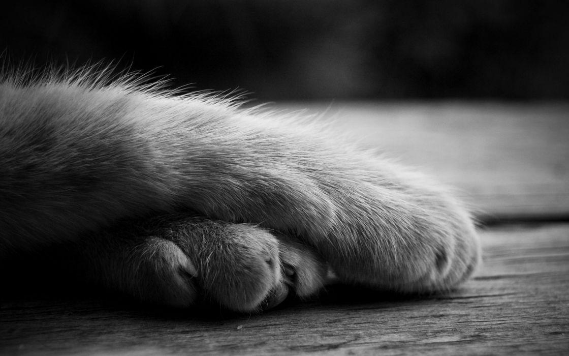Cute cat paws wallpaper