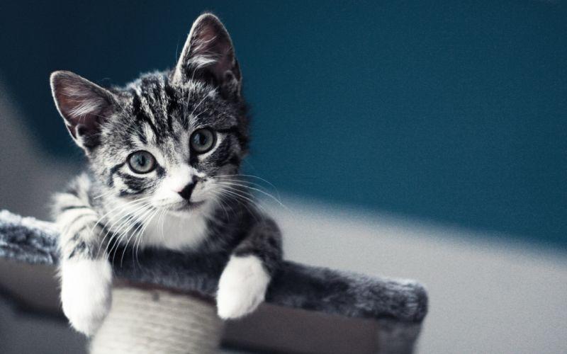 Playful kitten wallpaper