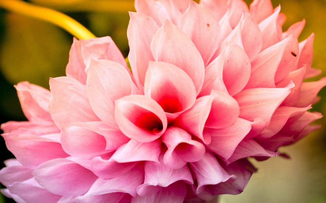 Cool pink flower wallpaper