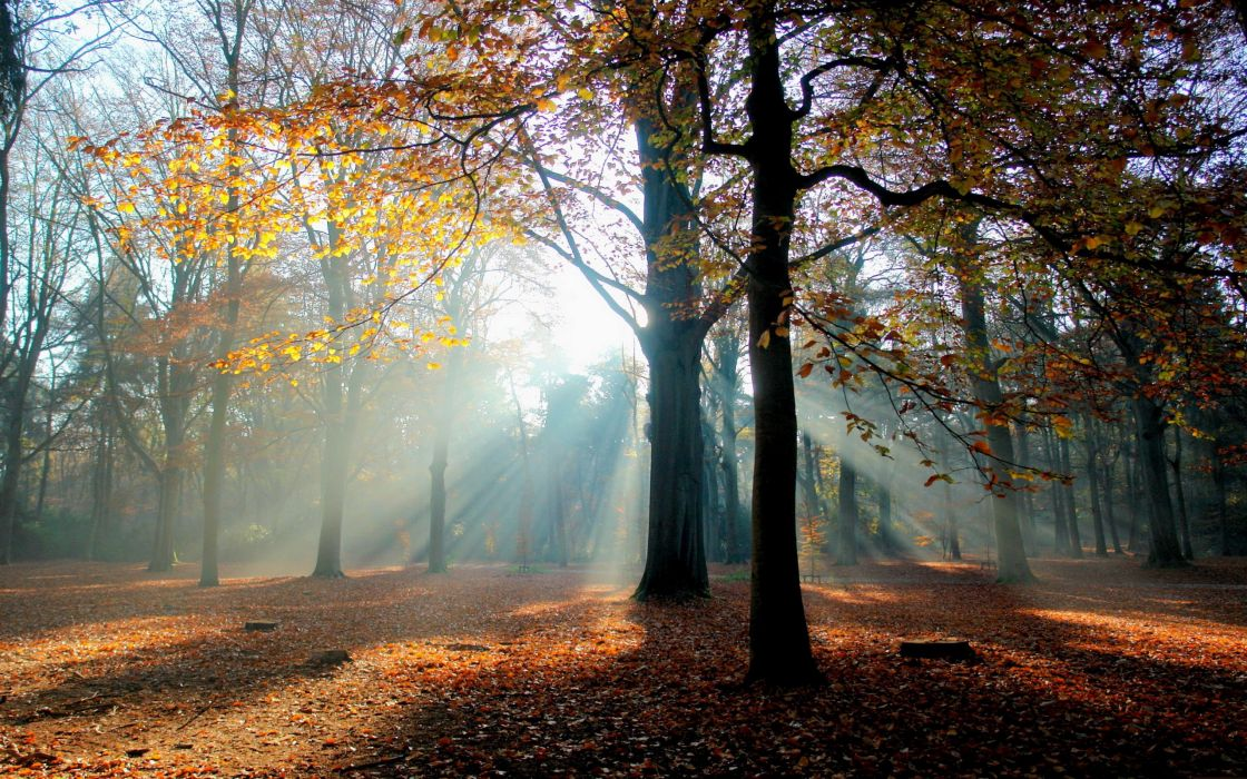 Earth autumn wallpaper