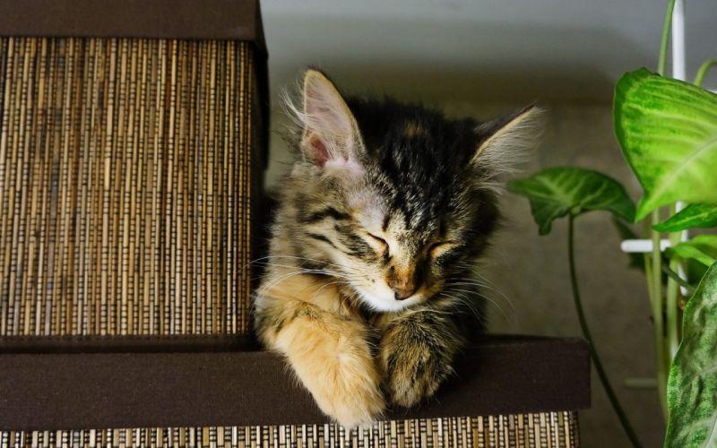 Sleeping cat on a box wallpaper