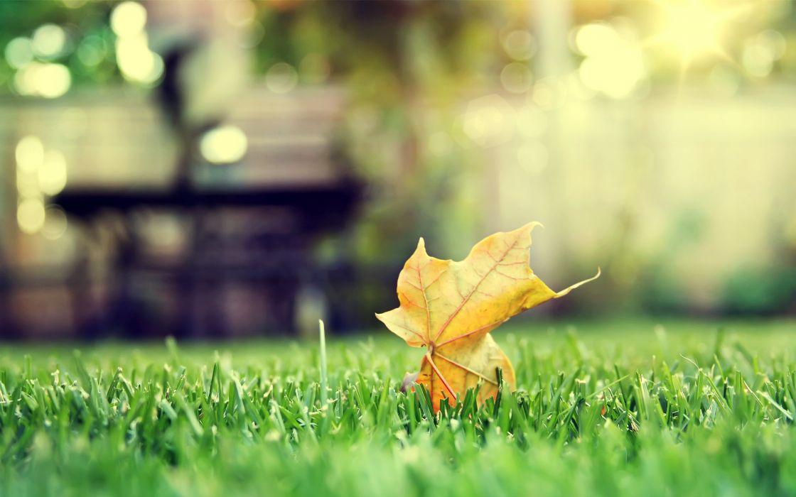 Orange leaf on grass wallpaper