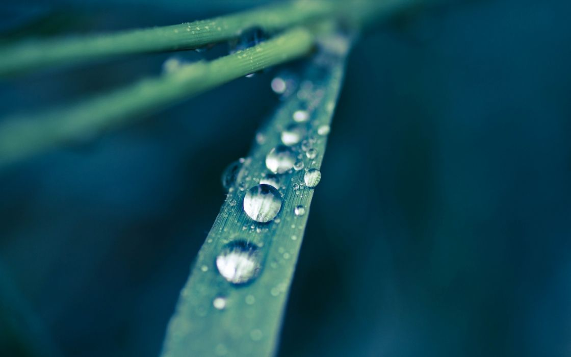 Dew drops on a grass leaf wallpaper