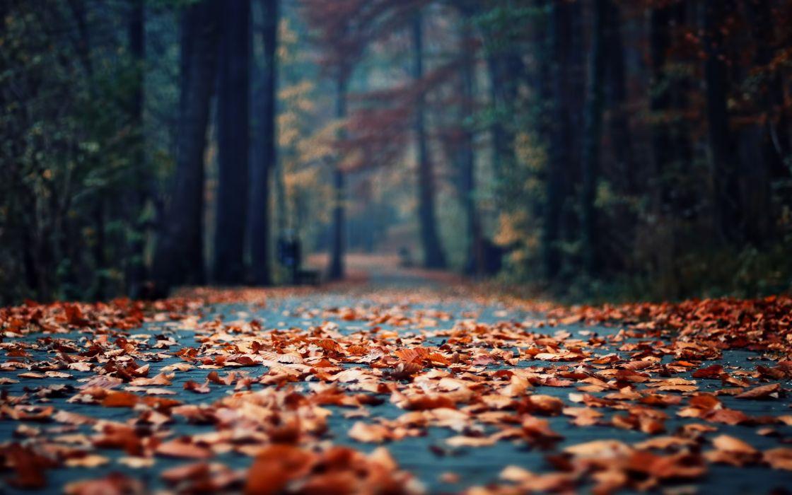 Autumn foliage in the park wallpaper