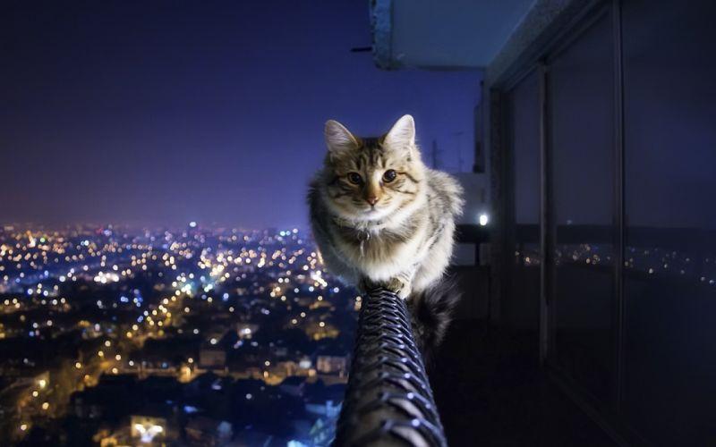 Fearless cat wallpaper