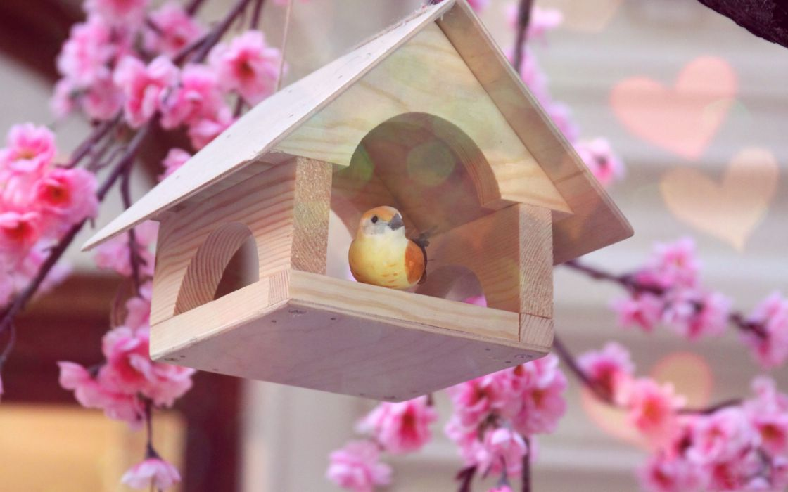 A little bird in his home wallpaper