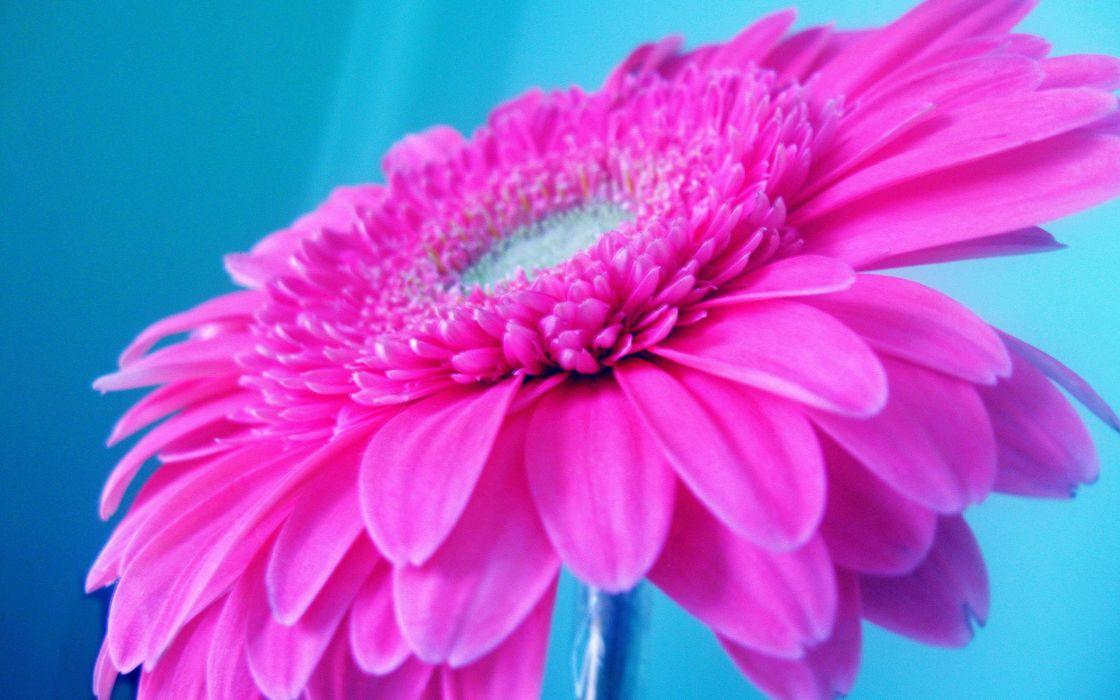 Giant pink flower wallpaper