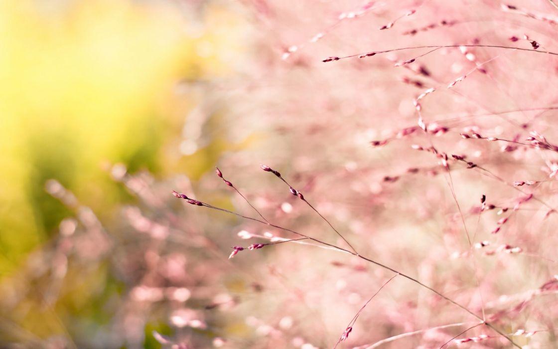 Pink nature wallpaper