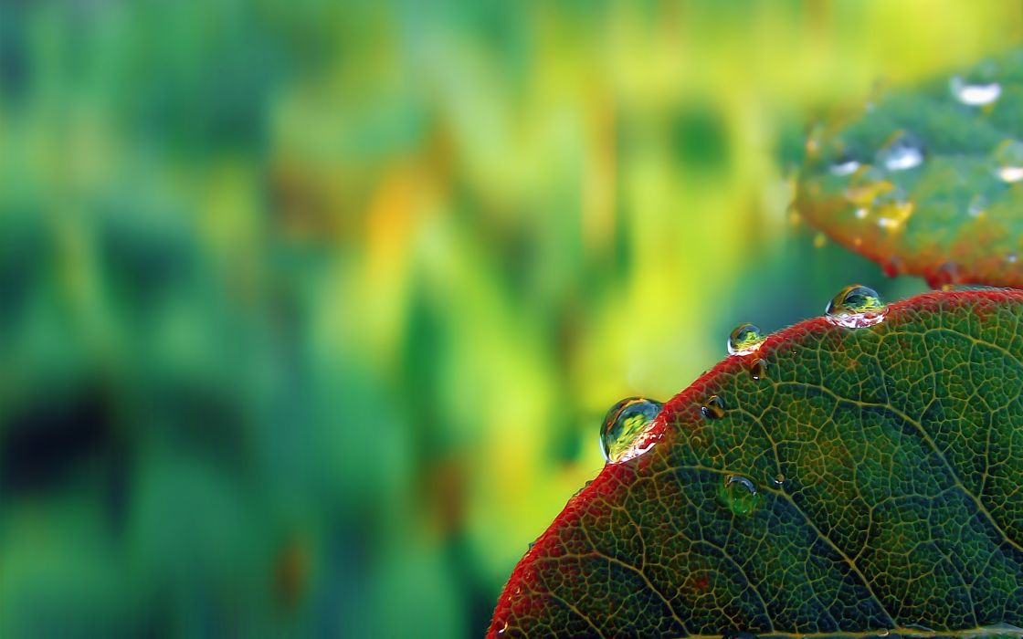 Dew at the edge of the leaf wallpaper