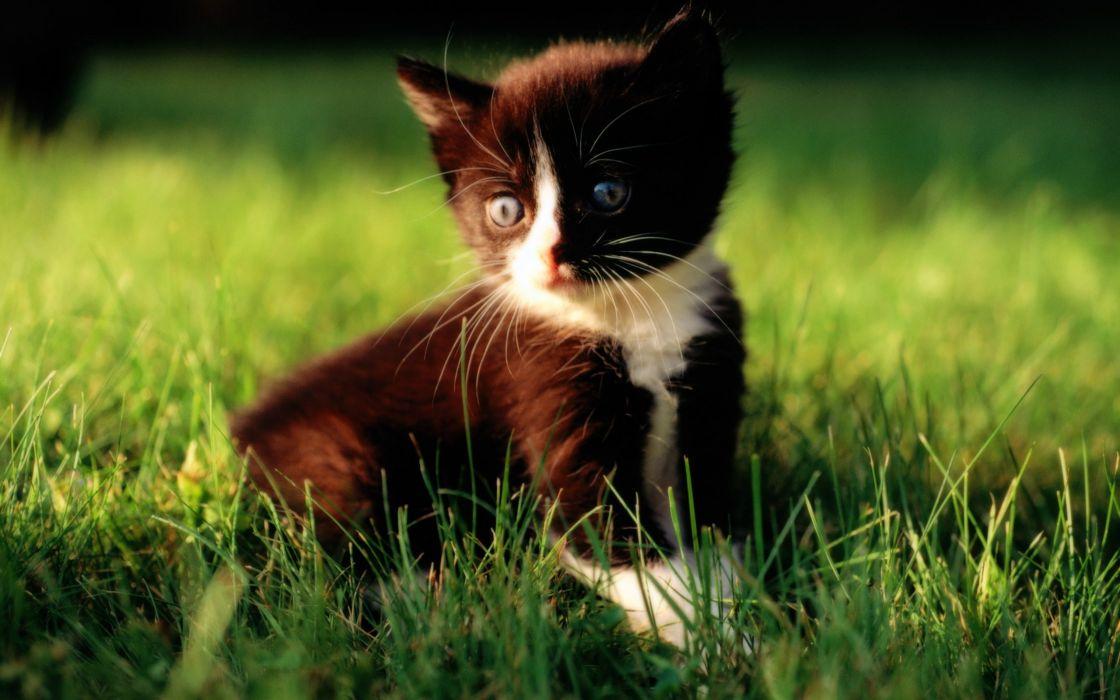 Loveable baby kitten on grass wallpaper