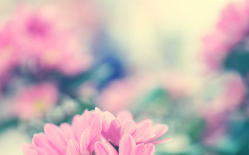 Good mood pink flowers wallpaper