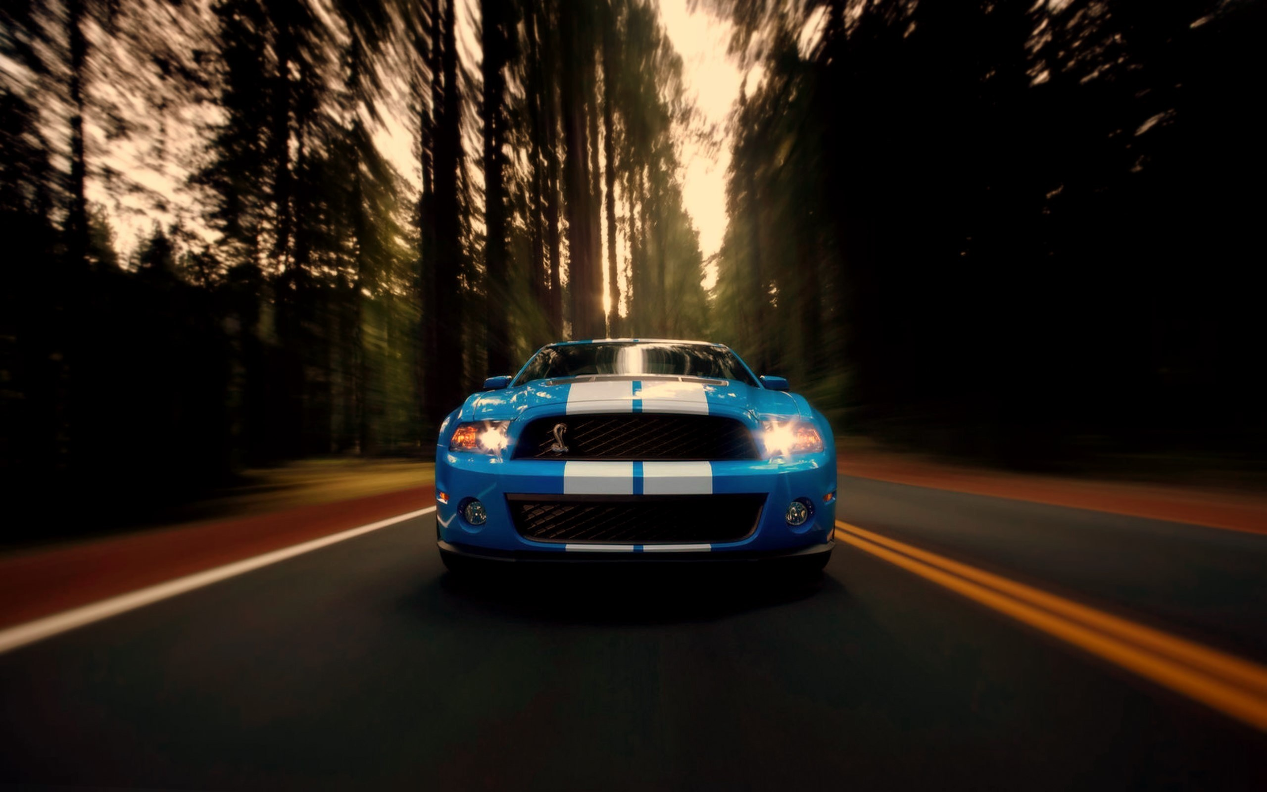 Azule and white Ford Mustang Shelby GT500 wallpaper  2560x1600
