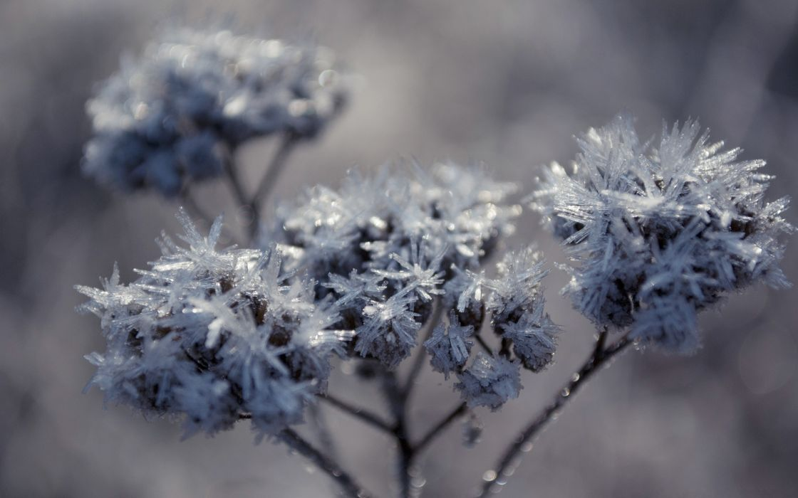 Frozen flowers wallpaper