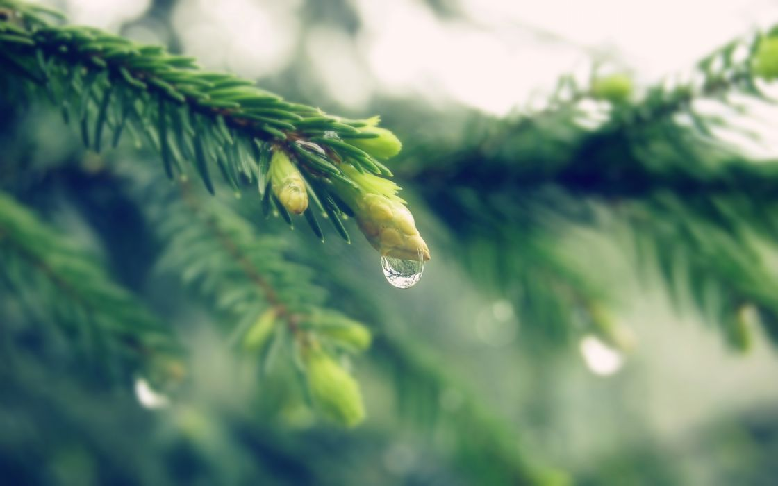 Close-up raindrop on tree wallpaper