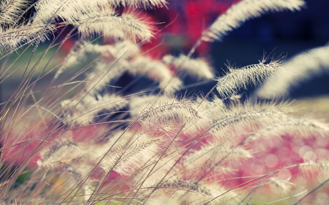Close-up of wild grass wallpaper
