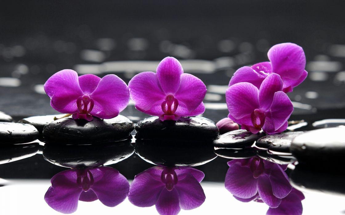 Purple orchid wallpaper