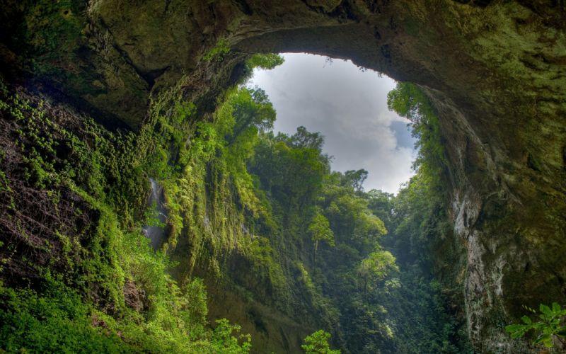 Deep in the jungle wallpaper