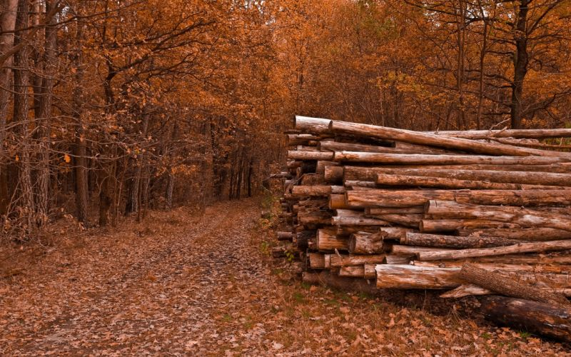 Logs in the forest wallpaper