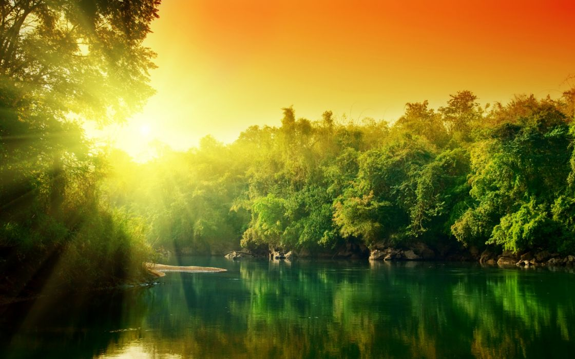 Sunset in jungle wallpaper