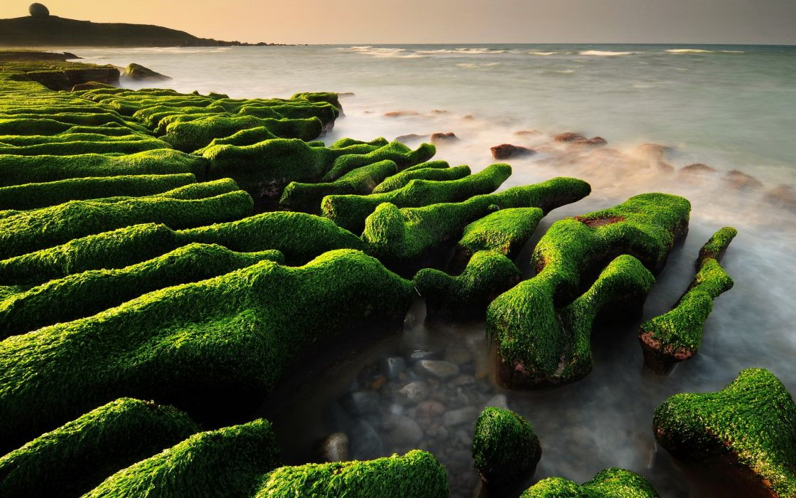 Beach made of stones covered with moss wallpaper