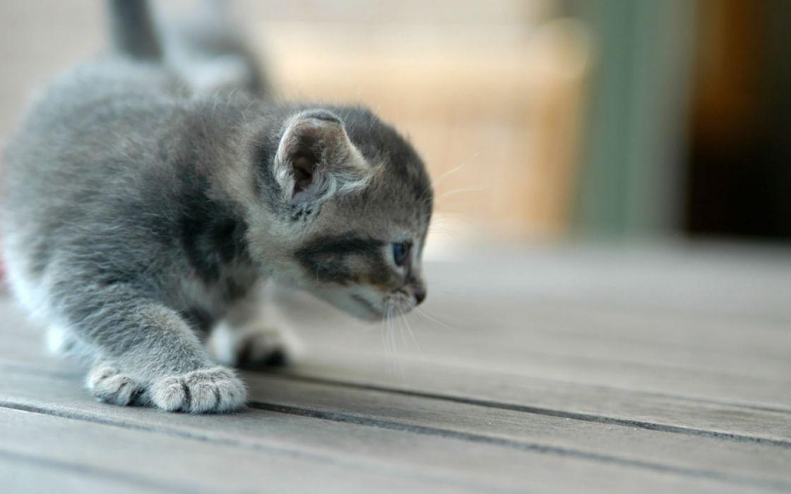 Kitten scouting wallpaper
