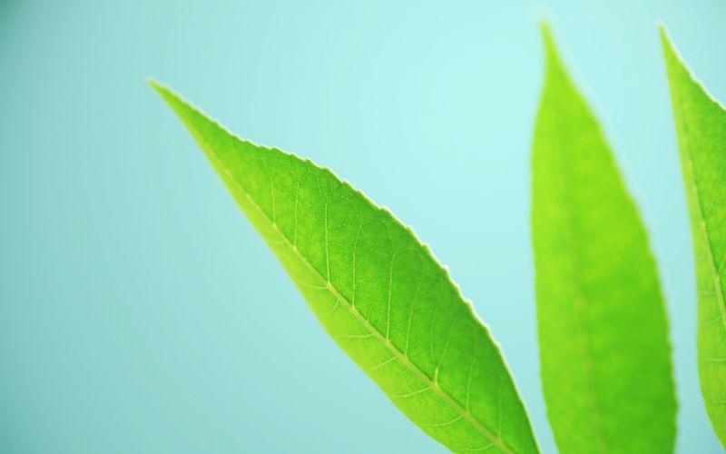 Simply leaves wallpaper