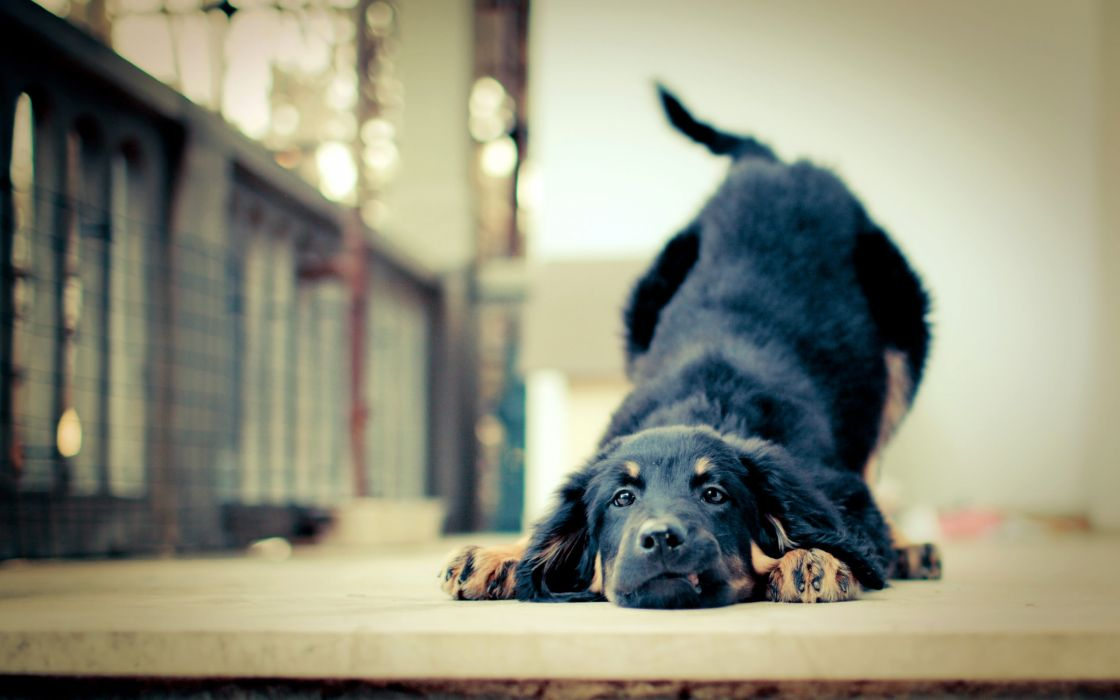 Stretching dog wallpaper