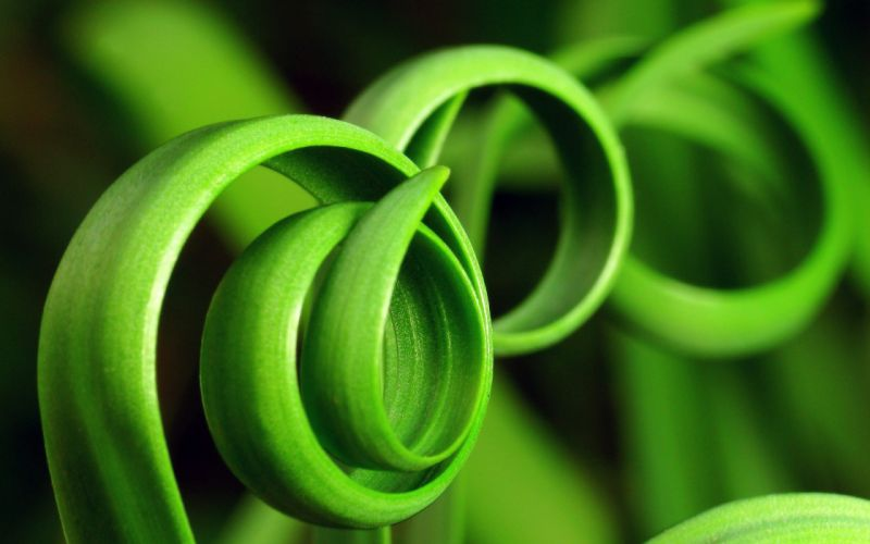 Curly plants wallpaper