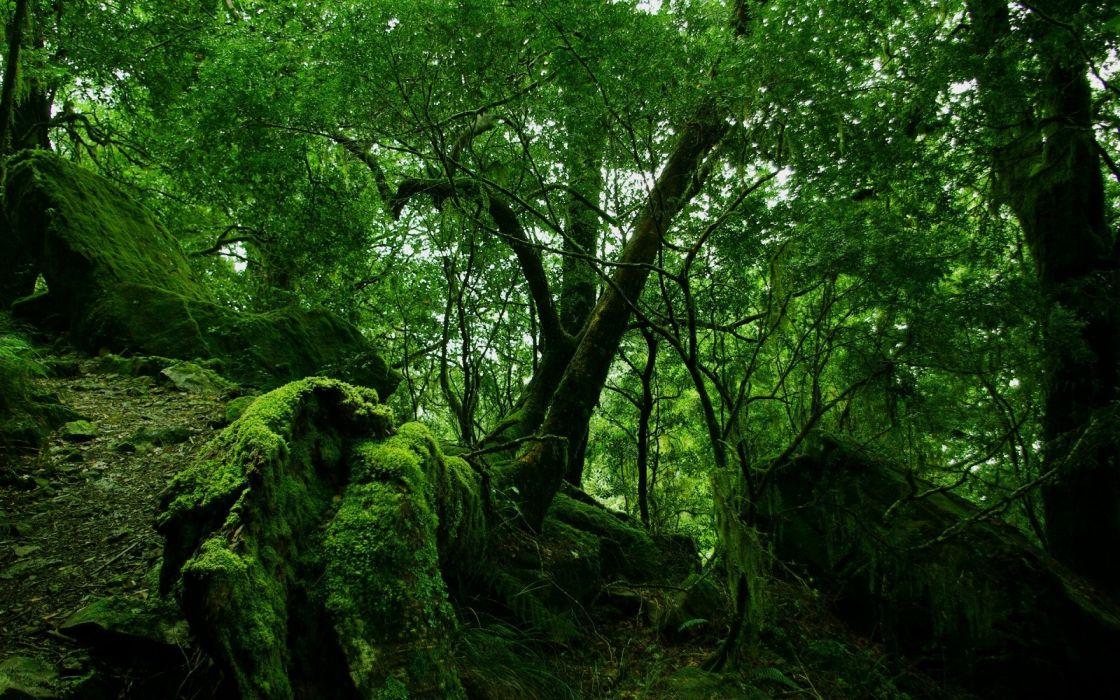 Rainforest and moss wallpaper