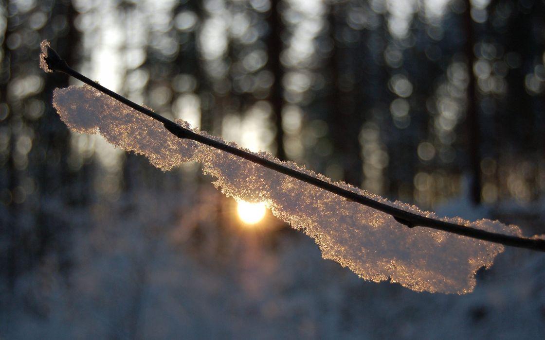 Warm winter sun wallpaper