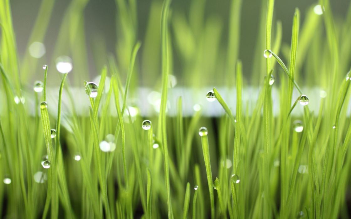 Dew drops over the grass wallpaper
