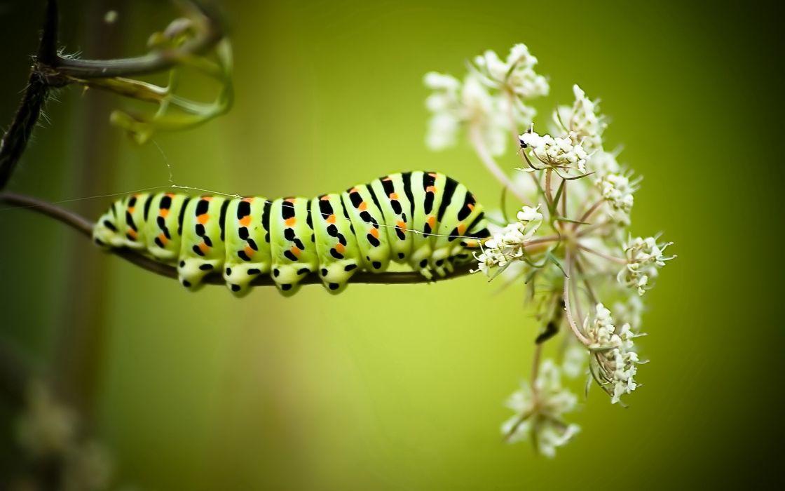 Green caterpillar wallpaper
