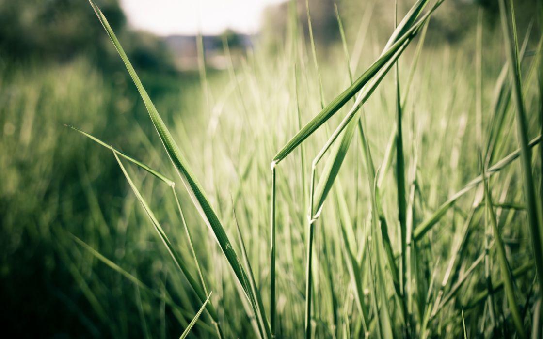 Plants in the field wallpaper