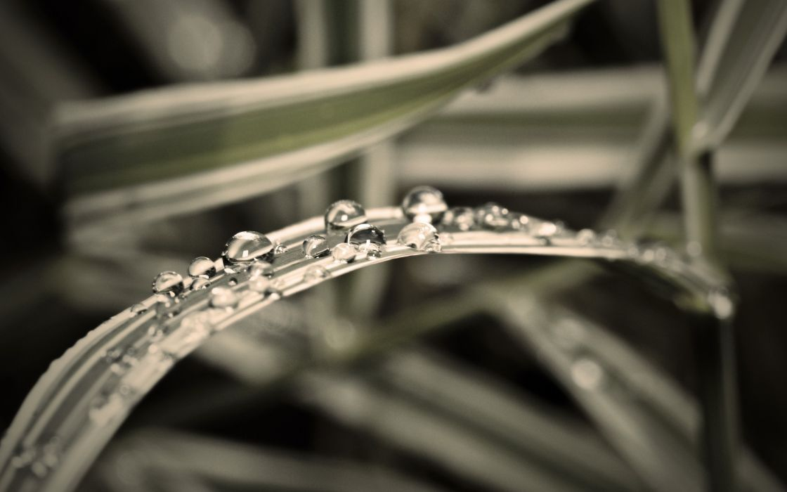 Water drops over the grass wallpaper