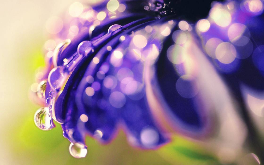 Drops of morning dew on a flower wallpaper