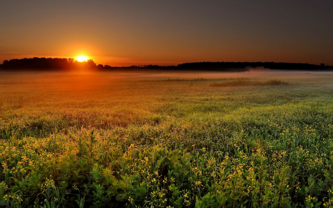 Sunrise over the field wallpaper