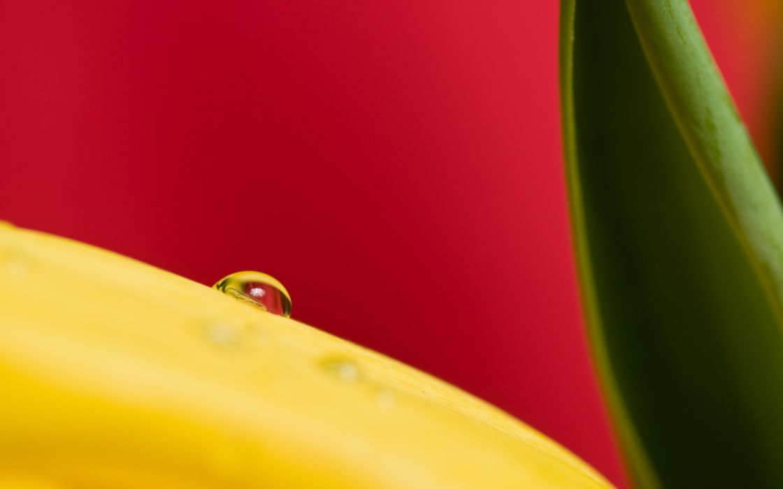 Drop on a yellow plant wallpaper