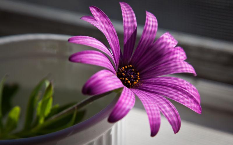 Superb purple flower wallpaper