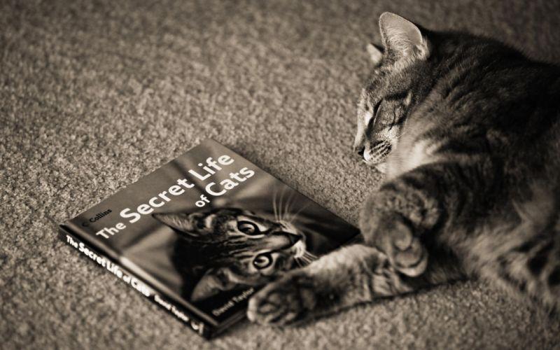 The secret life of cats wallpaper