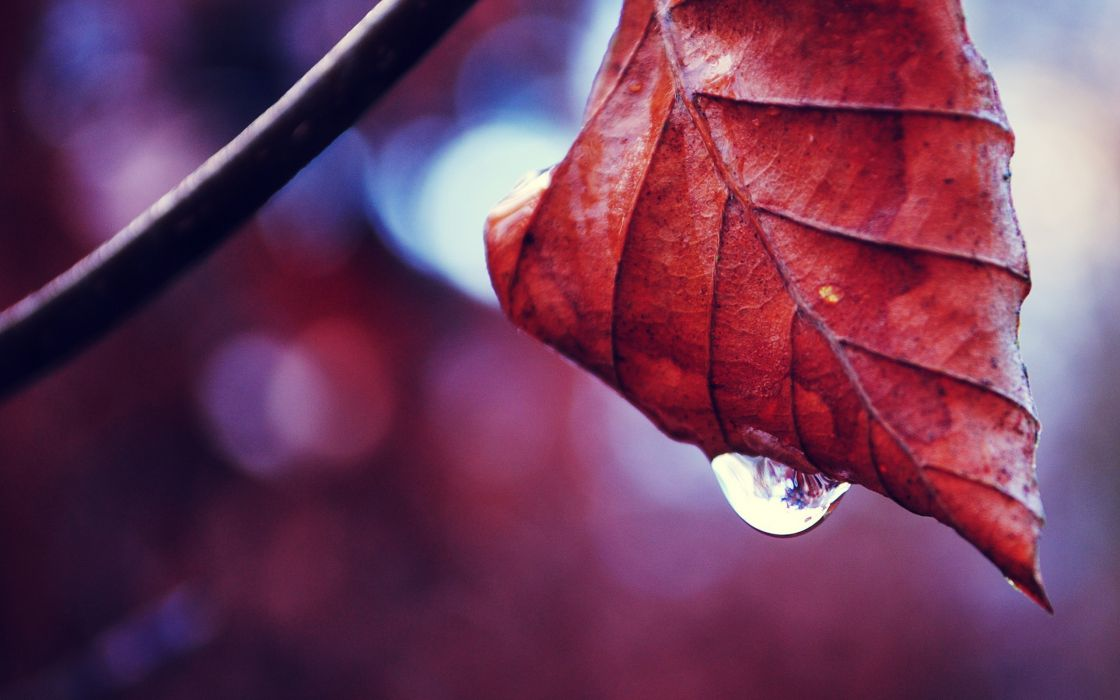 Falling drop from an autumnal leaf wallpaper
