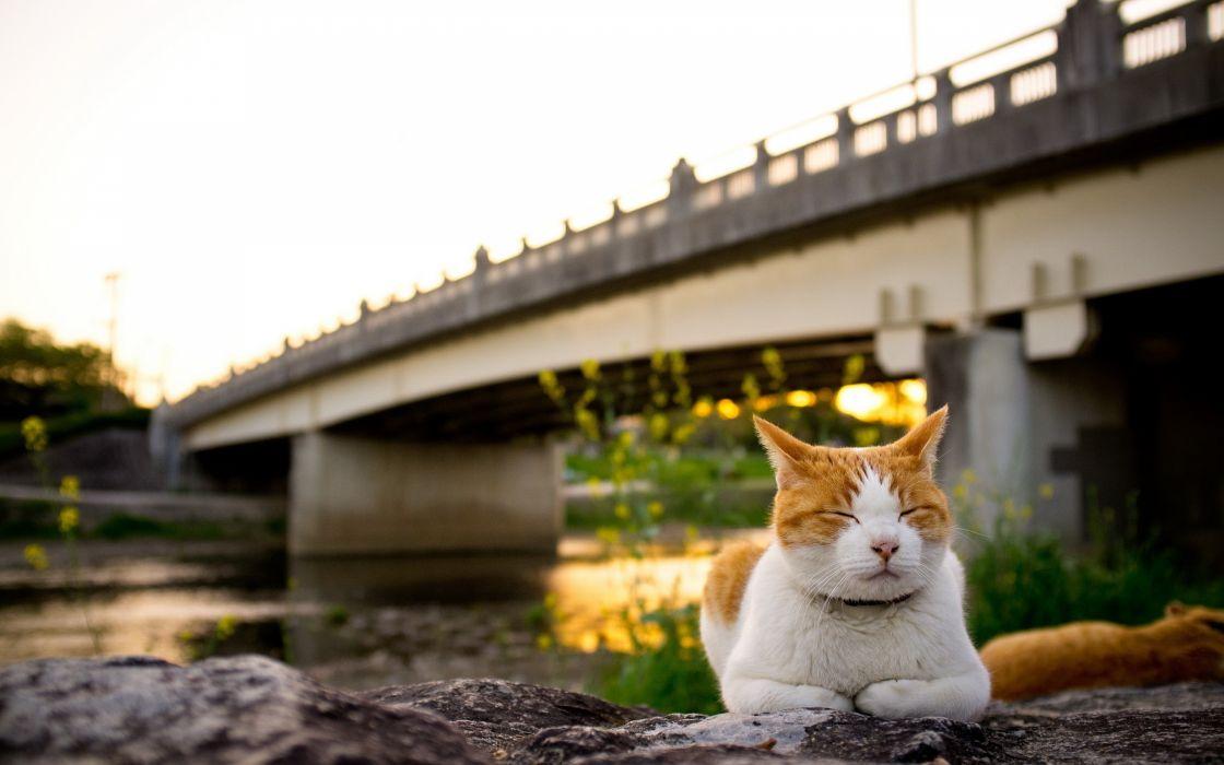 Cat meditating wallpaper
