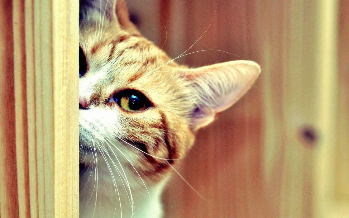 Cat hide and seek wallpaper