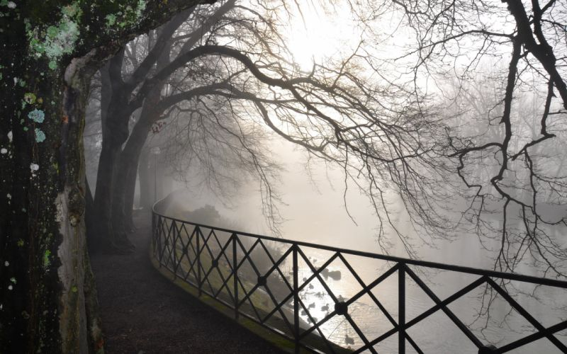 Fog over the tree wallpaper