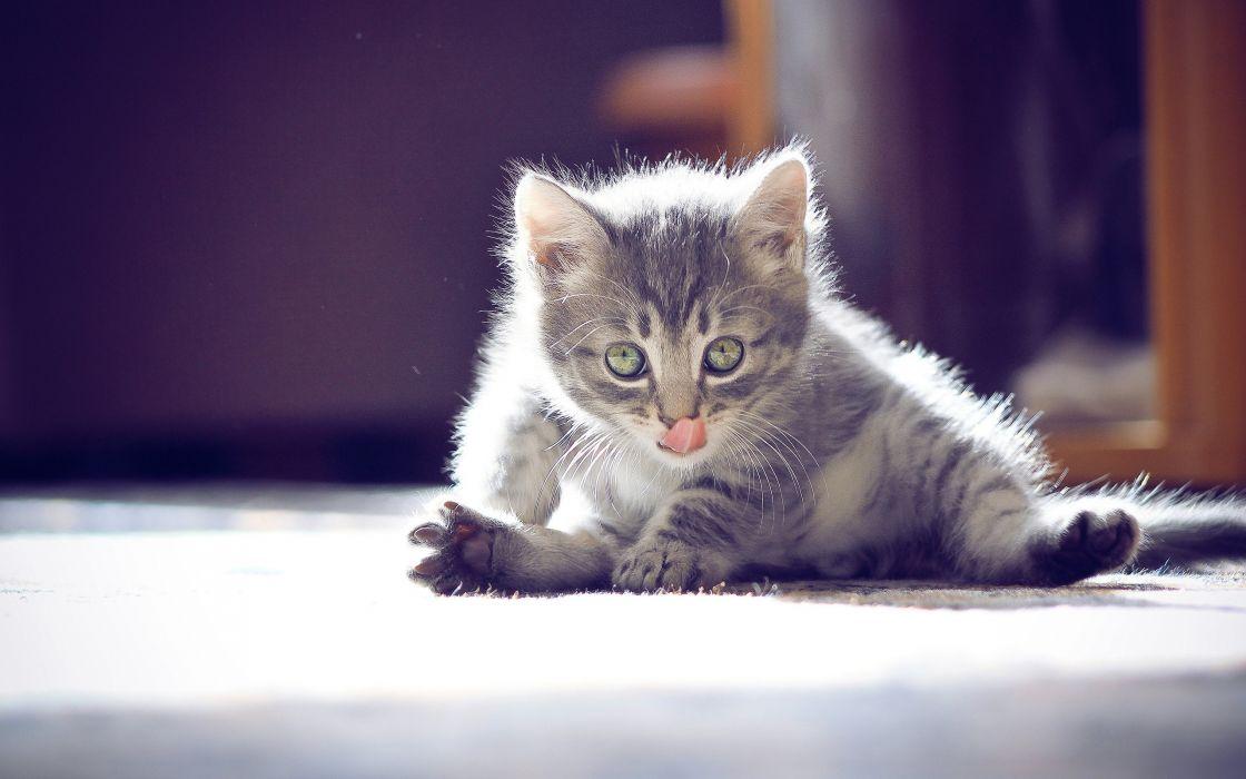 Cutest kitten wallpaper