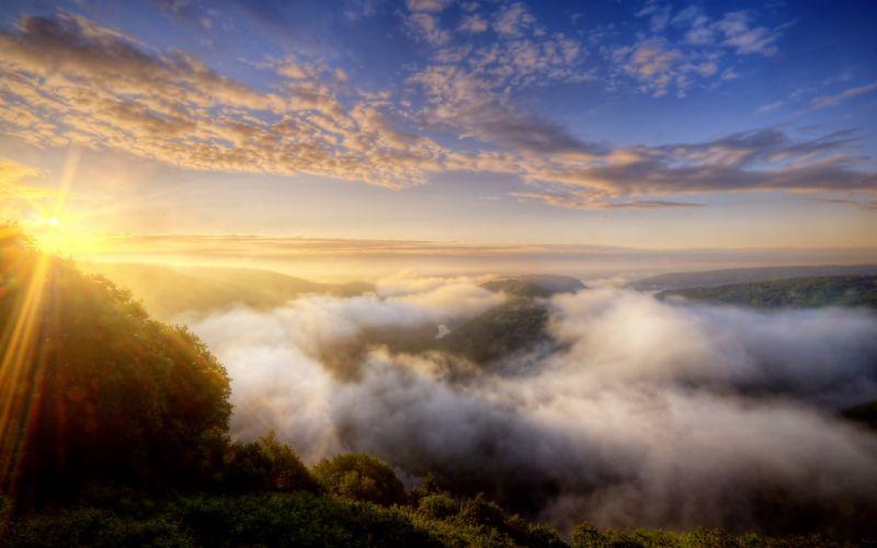 Morning mist over the forest wallpaper